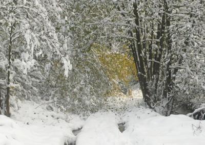 zima na posesji