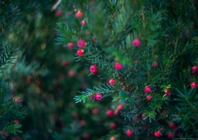 Zaczarowany Ogród