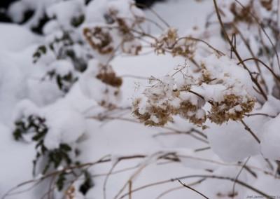 K1600_Kopia Zaczarowany Ogród zimą 25 (1 z 1)