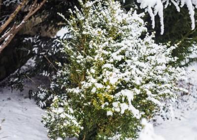 K1600_Zaczarowany Ogród zimą 10 (1 z 1)