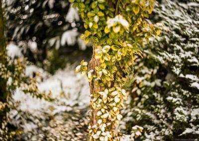 K1600_Zaczarowany Ogród zimą 11 (1 z 1)