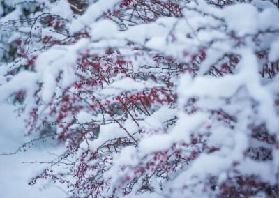 K1600_Zaczarowany Ogród zimą 18 (1 z 1)