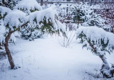 K1600_Zaczarowany Ogród zimą 19 (1 z 1)