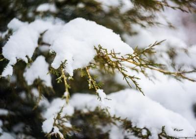 K1600_Zaczarowany Ogród zimą 5 (1 z 1)