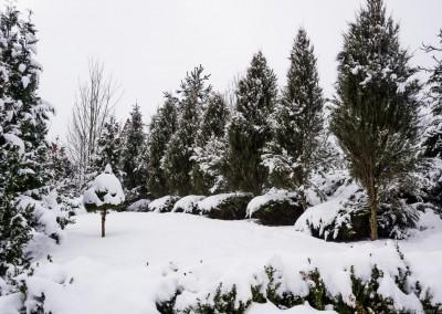 K1600_Zaczarowany Ogród zimą 53 (1 z 1)