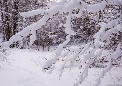 K1600_Zaczarowany Ogród zimą 64 (1 z 1)