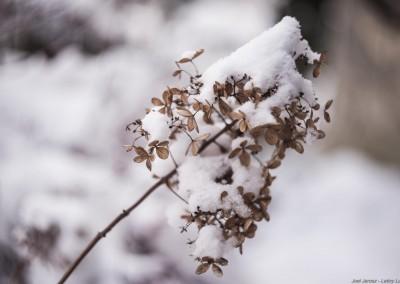 K1600_Zaczarowany Ogród zimą 76 (1 z 1)