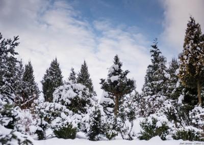 K1600_Zaczarowany Ogród zimą 89 (1 z 1)