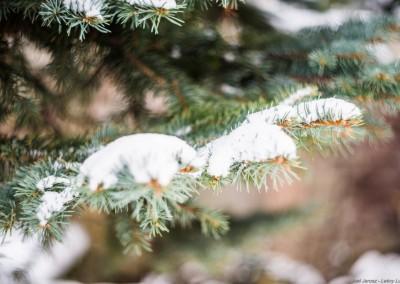 K1600_Zaczarowany Ogród zimą 94 (1 z 1)